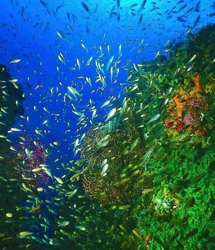 珊瑚產卵,魚兒最快樂。