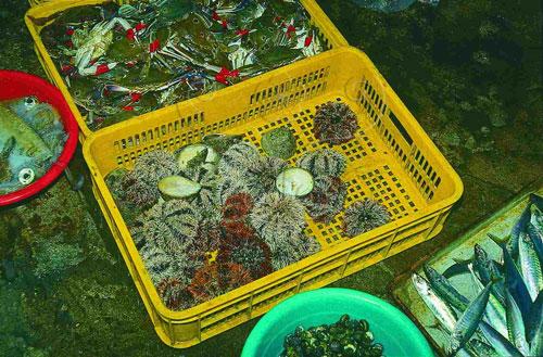 市場賣馬糞海膽,吃牠的生殖腺(精巢或卵巢)。