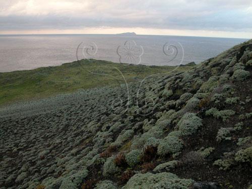 島上受強風侵襲,只有匍匐的草本植物,未見任何喬木及灌木,海芙蓉是島上最優勢的植物。