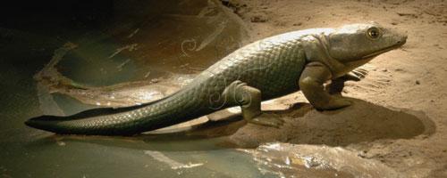 魚石螈生態想像圖