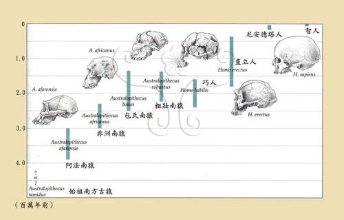 人類的起源發展與時間序列。