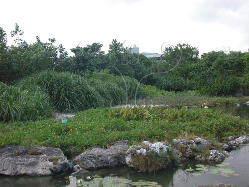 博物館植物園的隆起珊瑚礁區。