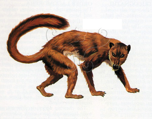 近猴(<i>Plesiadapis</i>)復原圖(取材自The Macmillan Illustrated Encyclopedia of Dinosaurs and Prehistoric Animal, 1992)