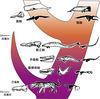 鯨豚家族演化