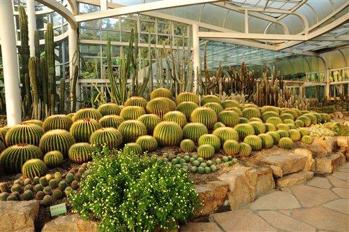 溫室內的多肉植物展示
