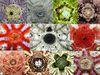 各種正型海膽的頂系