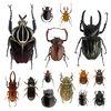 金龜子總科的各類甲蟲是深受注目的一群