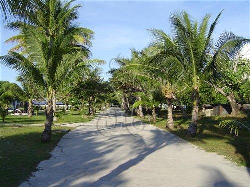 太平島上綠樹成蔭,可見沙洲島已經穩定。這當然是島嶼,不是礁岩