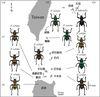 呂宋島至八重山群島間的島嶼與球斑球背象鼻蟲的分布