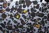 知名的石鐵隕石「艾斯奎爾橄欖隕鐵」