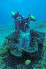 殼徑約100公分的巨硨磲蛤
