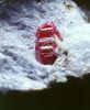 紅寶石是結晶透明的剛玉,因含鉻離子而呈紅色