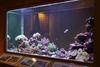 地球環境廳的珊瑚礁生物展示缸