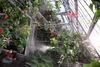 溫室中雨林植物展示