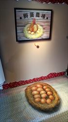先有雞還是先有蛋-雞與蛋的故事特展  展場內部