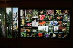 展場-索羅門群島植物物種多樣性
