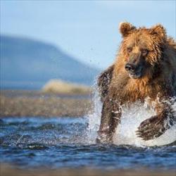 11獵食者-最艱難的挑戰